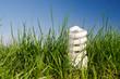 energy saving lamp in green grass