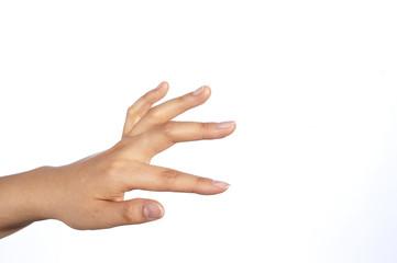 cinque dita