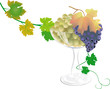 Grapes_in_vase