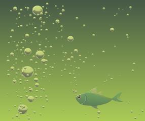 aquarium fish in water