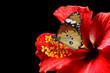 Kamla's hibiscus of bliss