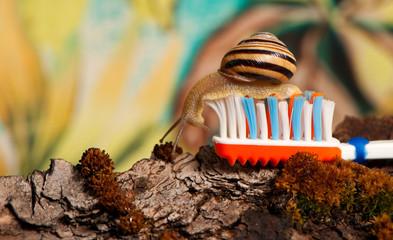 snail on toothbrush