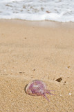 Medusa en la playa poster