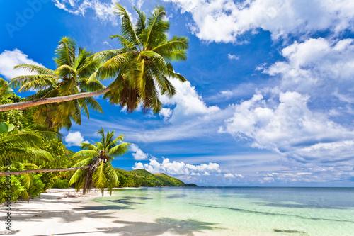 Zdjęcia na płótnie, fototapety na wymiar, obrazy na ścianę : seychelles plage cocotier