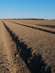 Freshly prepared and sown field