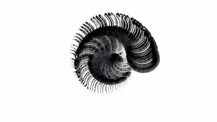 balck Profiled,Jellyfish,Conch,Rotating Sea biological.