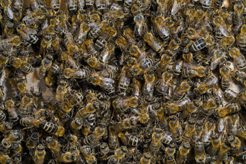 Bees in hive 7