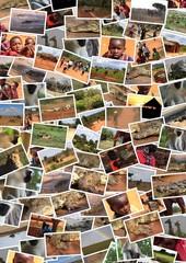 kenya safari collage