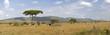 Kenyan savannah - 32063734