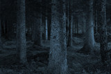 Fototapety blue forest