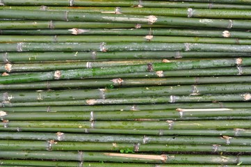 Beautiful bamboo fence