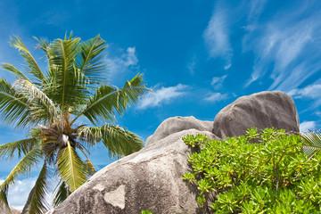 cocotier et rochers à la Digue aux Seychelles