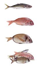 Gruppo di Pesce