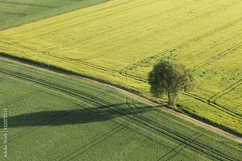 arbre au milieu des champs