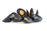 cooked mussels - cozze bollite