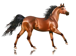 Vector running bay arabian horse
