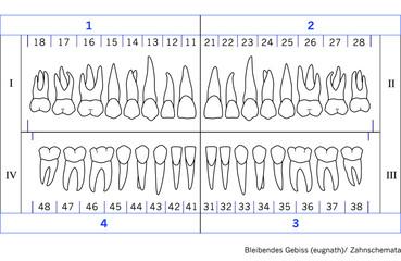 Zahnschemata/ eugnathes Dauergebiss