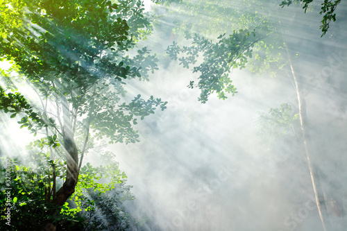 beautiful morning tropical forest sunbeam - 32108110