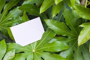 letter[fatsia]_01