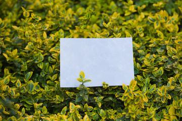 letter[leavesC]_12