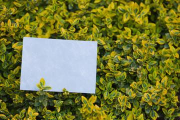 letter[leavesC]_11