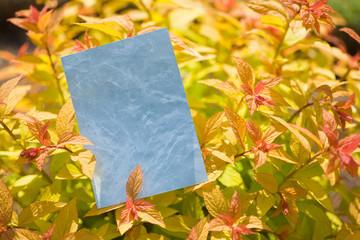 letter[leavesD]_11