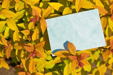 letter[leavesD]_07