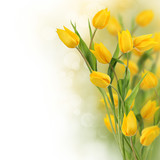 Fototapety Yellow tulips with copy space