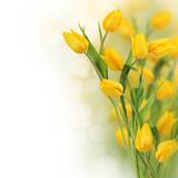 Fototapeta kwiaty - kwiat - Kwiat
