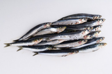 italian fresh anchovies