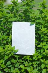 letter[leavesP]_01