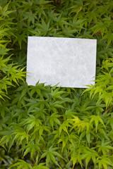letter[maple]_19