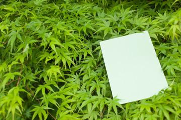 letter[maple]_16
