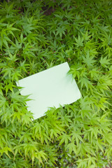 letter[maple]_14
