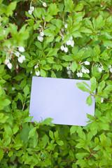 letter[white_enkianthus]_56