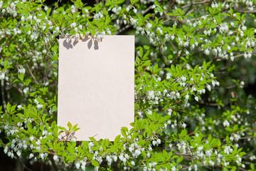 letter[white_enkianthus]_54