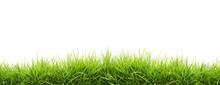 "Постер, картина, фотообои ""fresh spring green grass"""