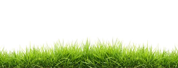 Wiosenne zielone trawy
