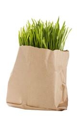Organic Wheat Grass