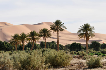 The Great Dune, Erg Chebbi, Merzouga, Morocco, Africa