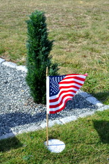 A Tree Planted for a American