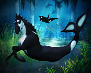 Killer Whale Sea Horse