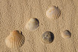 Seashells over sand
