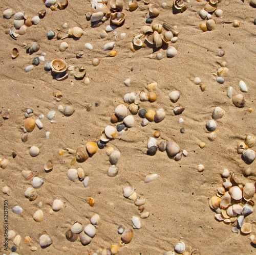 Small seashells over sand