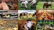 Farm Animal multiscreen