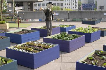 Rooftop garden at South Bank Centre. London. England