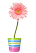 flower nature garden botany daisy bloom pot
