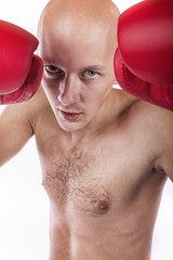 Studio shot of boxer