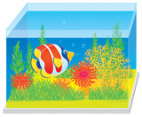 Tropical fish in an aquarium with corals and algae poster