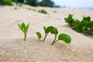 seedling in desert